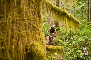 The lush Pacific Northwest forest. Photo by Dave Silver.  Photo by Dave Silver